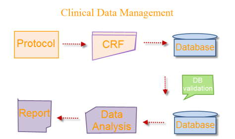 Anayansi Gamboa - Clinical Data Management Process