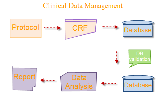 Clinical Data Management Process
