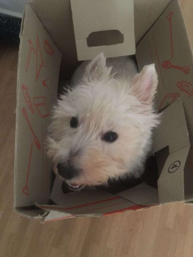 Where in the World is my Westie?